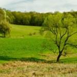 spring-oak-229x153